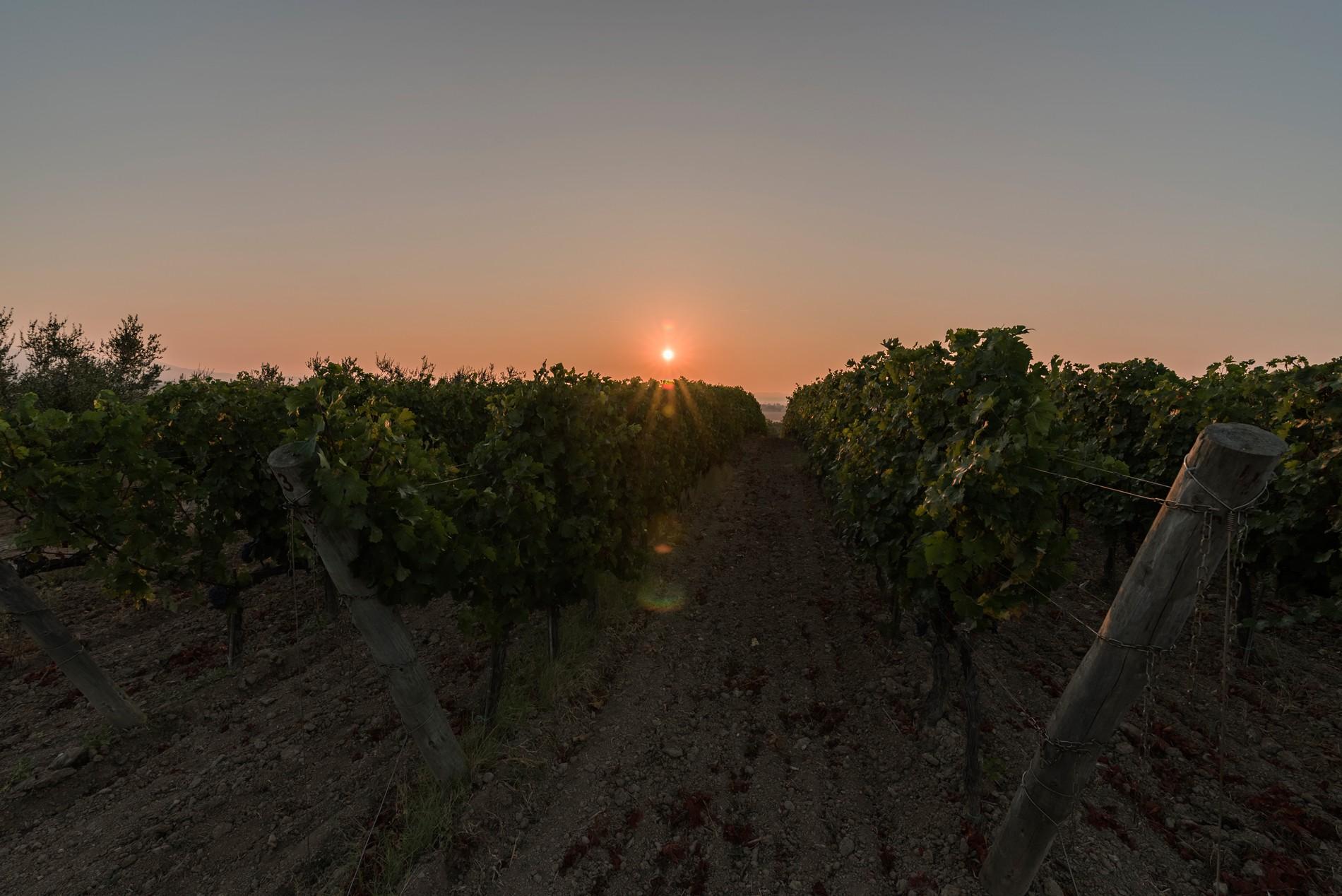 Le vigne della Maremma